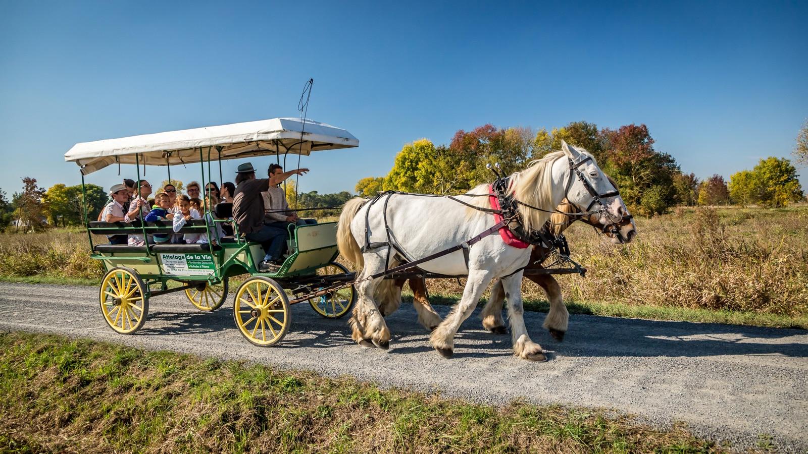 Balade à cheval en calèche en Vendée, Stéphane Grossin