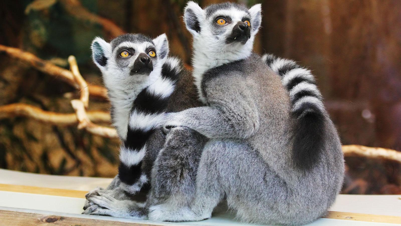 Visiter en vendee - Zoos