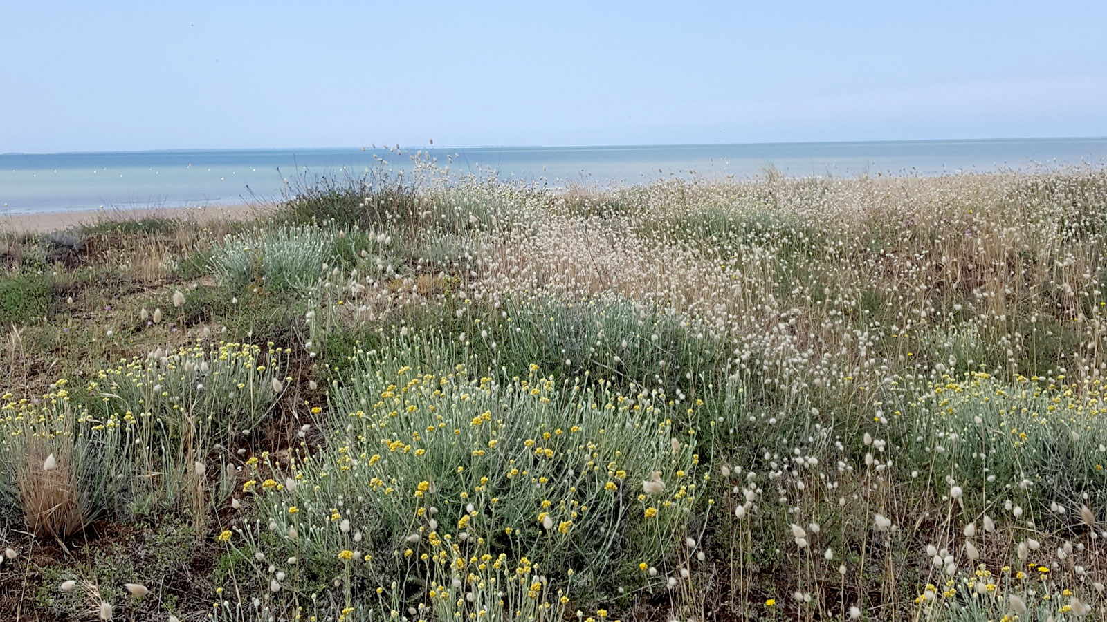 Balade-a-pied-randonnee-vendee-sentier-de-la-dune-au-Marais4
