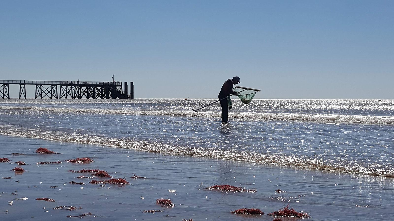 MichelARNAUD-crevettes-maree-peche