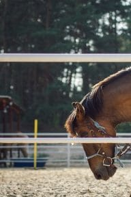 centre-equestre-saintjeandemonts-balade-cheval