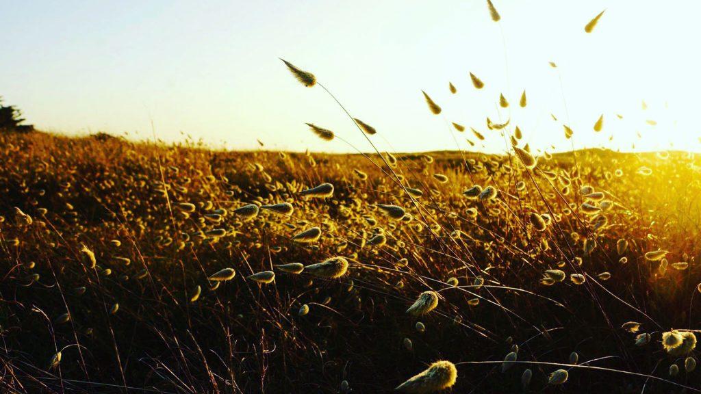 notredamedemonts-florianperoud-dune