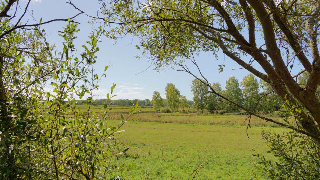 Balade-a-pied-randonnee-vendee-sentier-du-grand-marais-Prairie