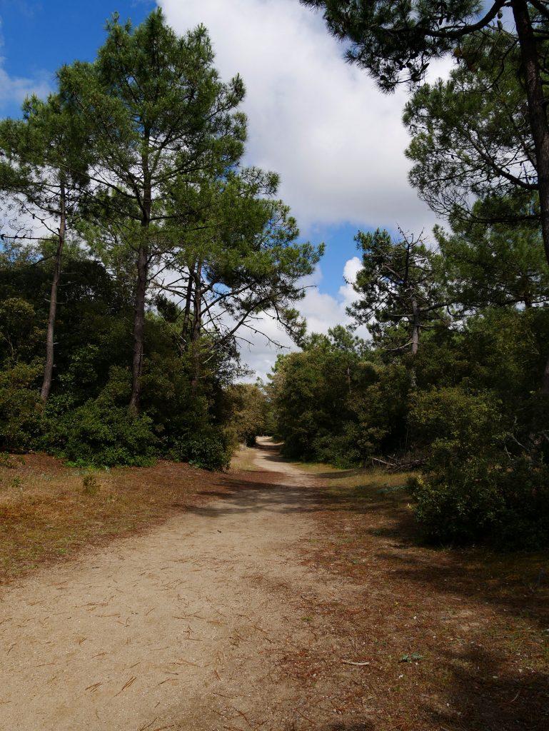 plage-de-la-renaudiere-notredamedemonts5