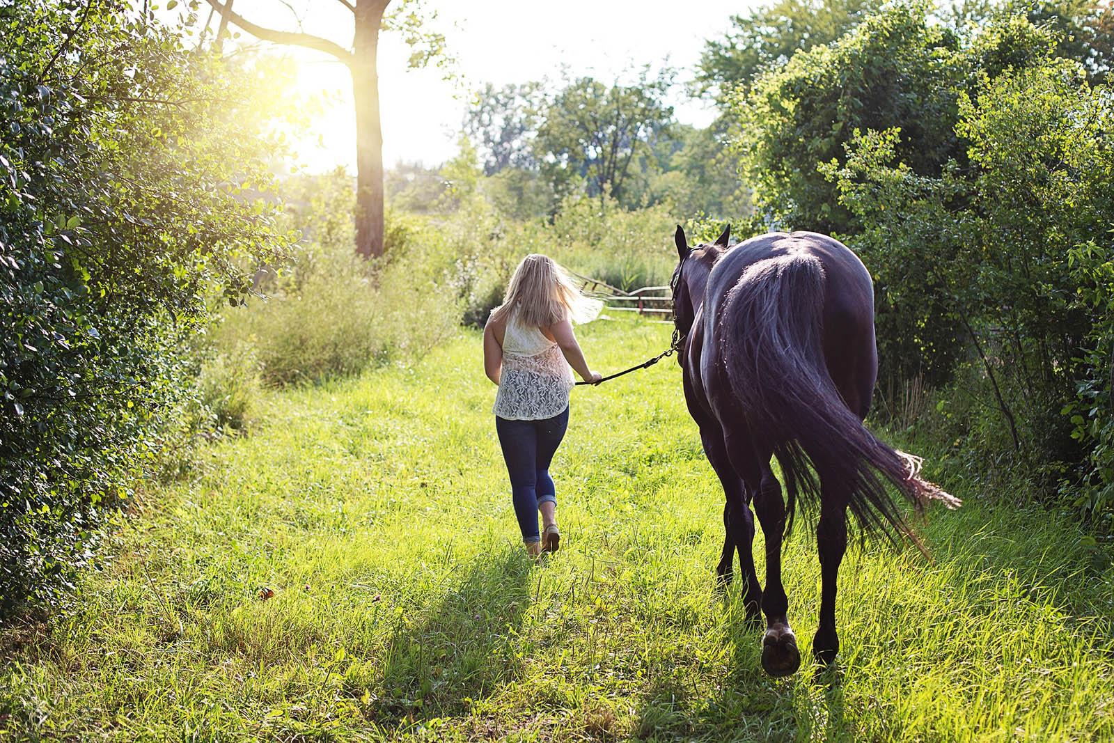 cheval-paysdesaintjeandemonts